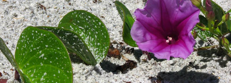 Beach+Bloom.jpg