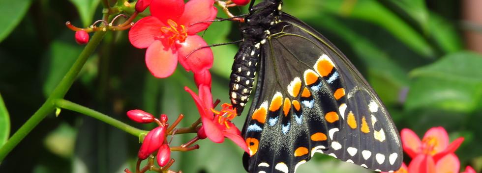 ButterflyEncounter2014.607+137.jpg