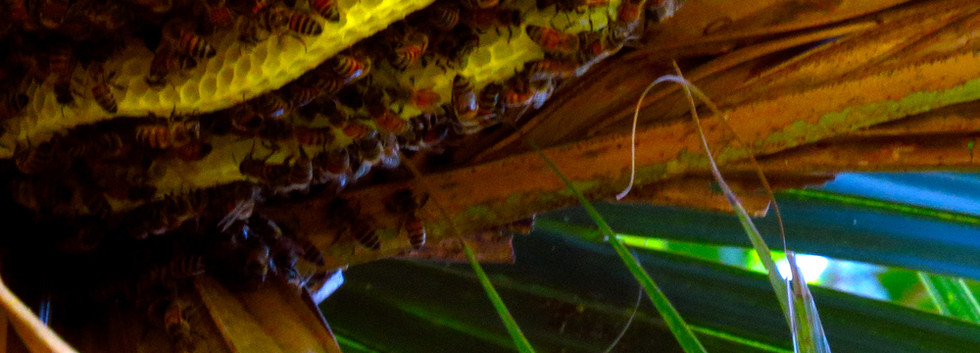 BeeHive2014.513+268+8x11.jpg