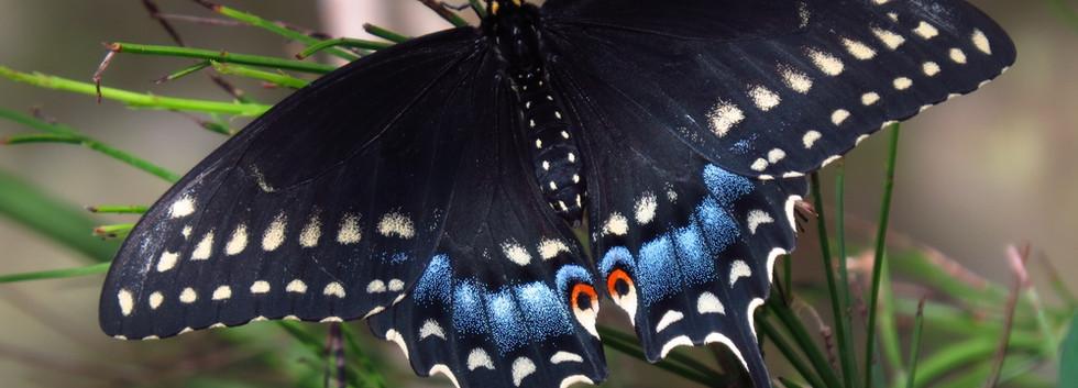 ButterflyEncounter2014.607+217.jpg