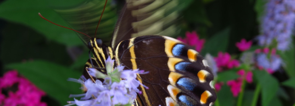 ButterflyEncounter2014.607+573.jpg