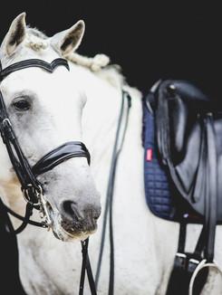 Paulo Santos Saddle (4 of 88).jpg