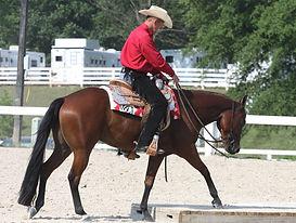 passaggio trail horse