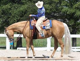 trail horse