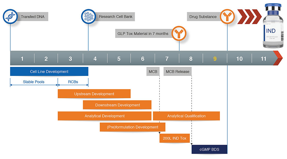 Gene-to-GMP-Production-Timeline-Typical-