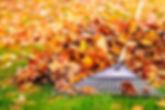 Rake and pile of leaves.jpg