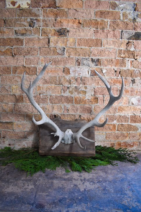 Deer Antler, Rustic, Wedding, Event, Hire