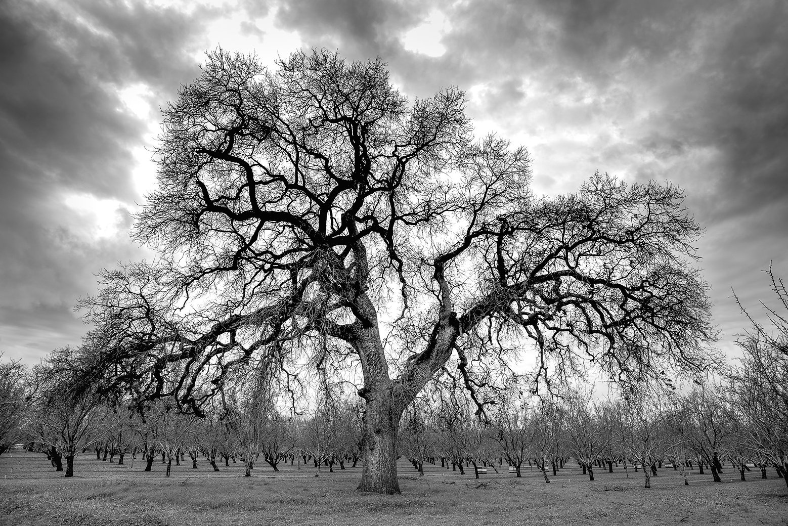 TREES 99N FEB2017_DSC42304230.jpg