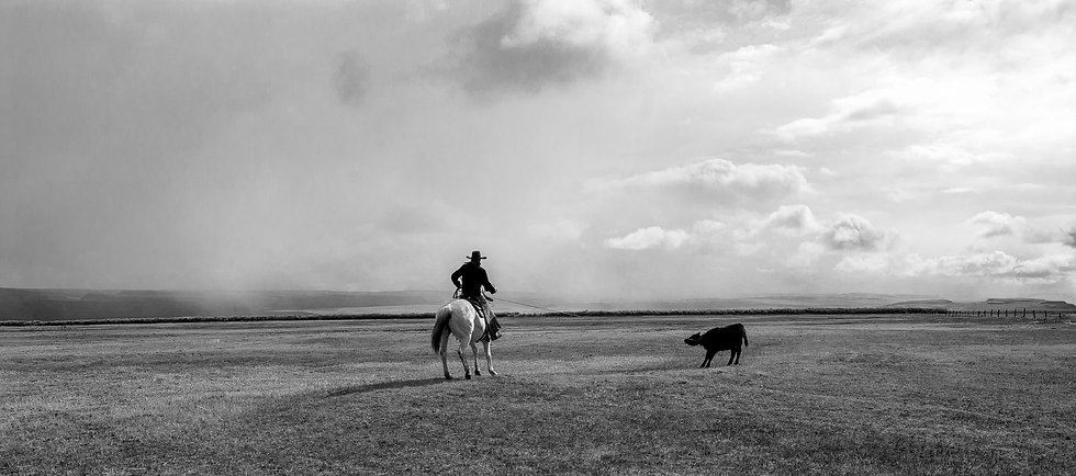 lone cowboy roping a cow on empty plain, Warner Valley, Oregon
