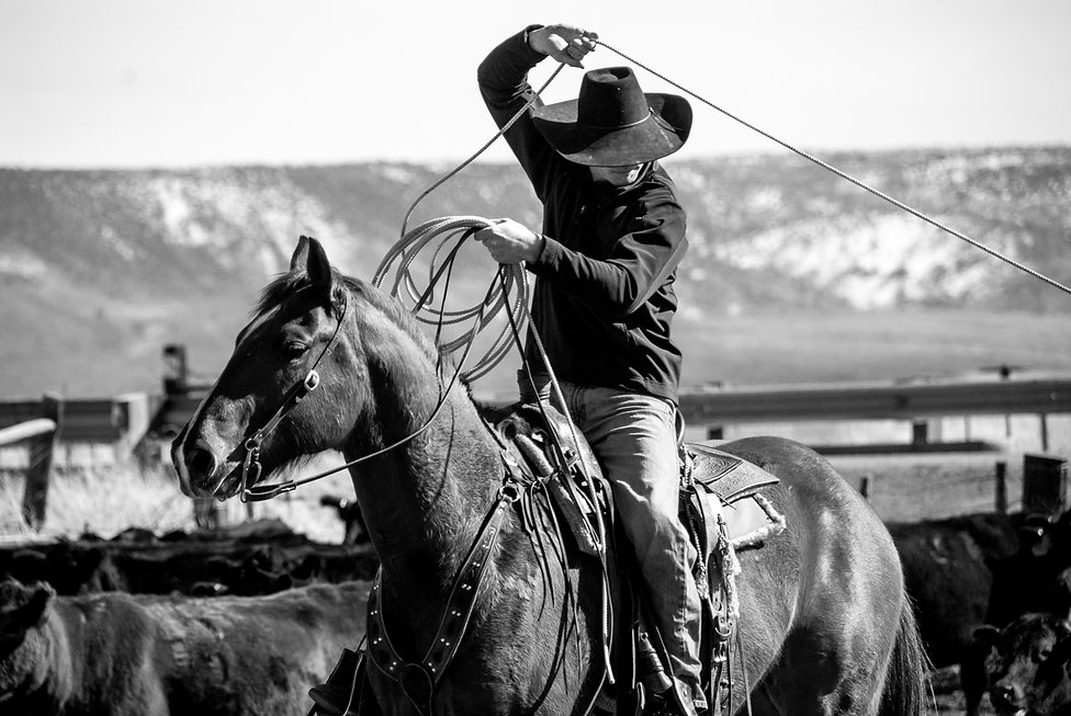 Cowboy on horse roping a calf, Adel Oregon
