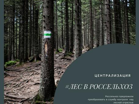 Контрольные полномочия над лесной отраслью могут поднять в Рослесхоз