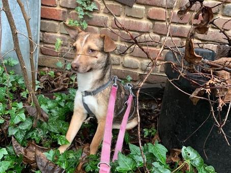 Mein Pflegehund Greta – Teil 2