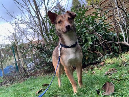 Mein Pflegehund Greta – Teil 3