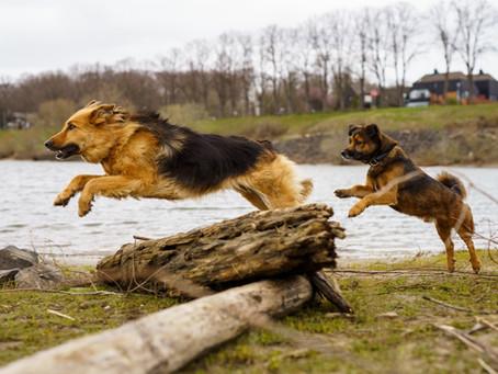 Fünf Punkte,  die ihr immer bei der Auswahl von Hundefutter beachten solltet