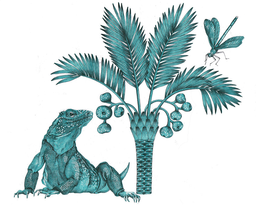 IguanaLHOriginal.jpg
