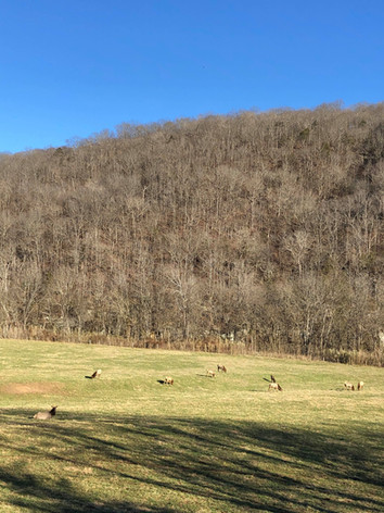 Elk enjoying the sunny day