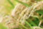 ELFAIMG_1632_TP_V.jpg