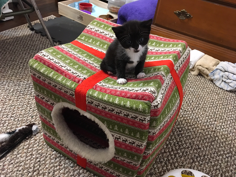 Mina sitting on top of a cat house.