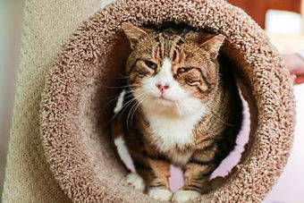A tabby cat in a cat tower tunnel.