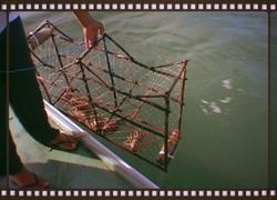 Legal lobster trap