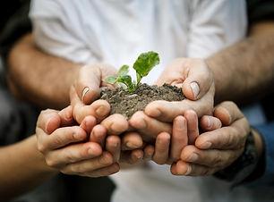 hands plant.jpeg