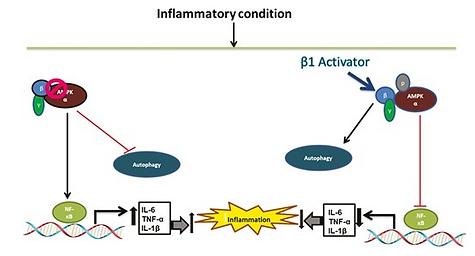 Screenshot 2021-08-17 at 15-28-04 Salicylates Ameliorate Intestinal Inflammation by Activa