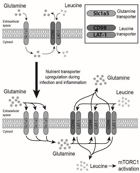 J. Biol. Chem.-2019-Almutairi-jbc.RA118.bmp