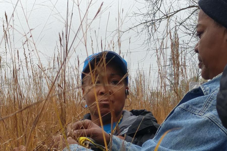 Member gather native plant seeds for habitat restoration