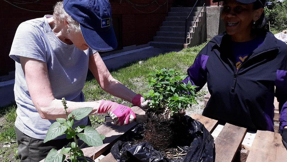 Susan Stone of Chicago Sinai Congregation (left) and Pastor Reshorna Fitzpatrick (right) plant the garden!