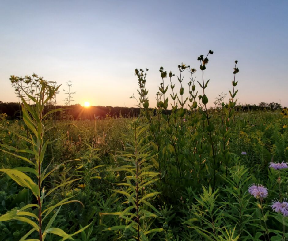 A sunset captured on the prairie during the 2019 North & West Suburbs Eco-Ambassadors' nature outing.