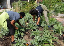 Gardeners tend to the crops at Trinity UCC's The George Washington Carver Garden.