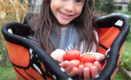 Tomato Harvest! Yaretzi wears Monarch Butterfly wings
