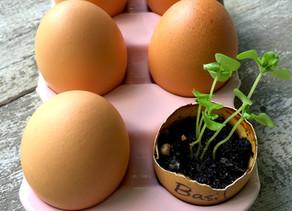 Weekend Project: Eggshell Herbs