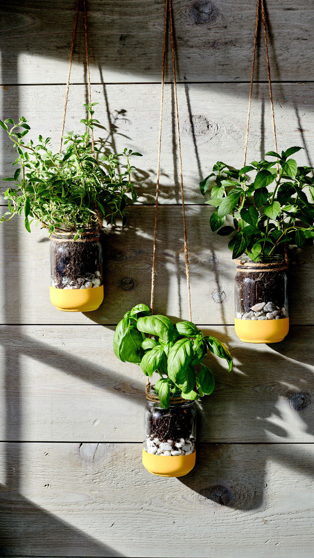 herbed garden on wall.jpeg