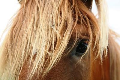 Riding Sidesaddle, equestrian, horses, side saddle
