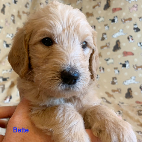 Reserved - Bette