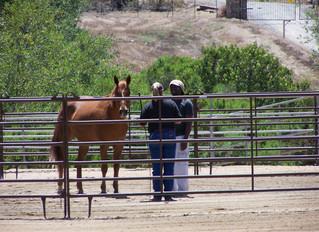 Horses as Teachers, Not Tools
