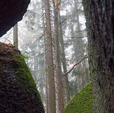 Waldviertel 2018