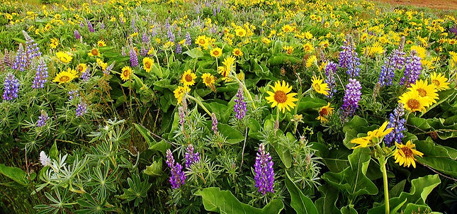 rowena_plateau_wildflowers_by_greglief-d