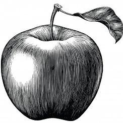 gala-apple-fruit-drawing-vintage-isolated-white-background_67600-244_edited.jpg