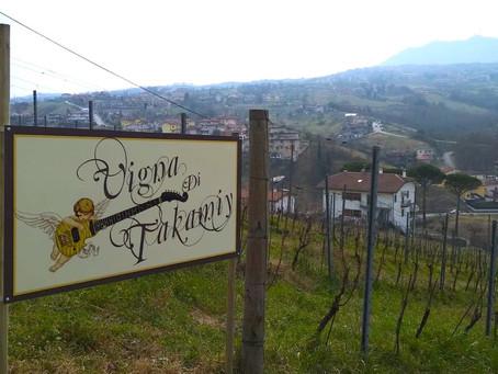 サンマリノに高見沢俊彦さんの葡萄畑が! その名も『Vigna di Takamiy』