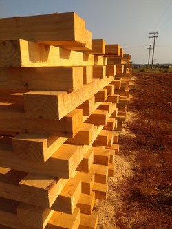 Pinus em blocos