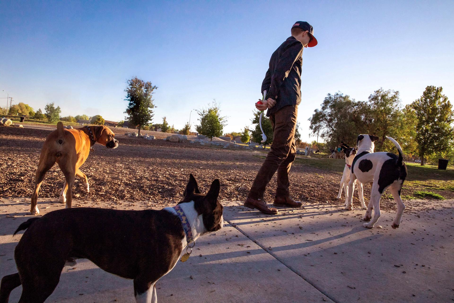 Millrace Dog Park