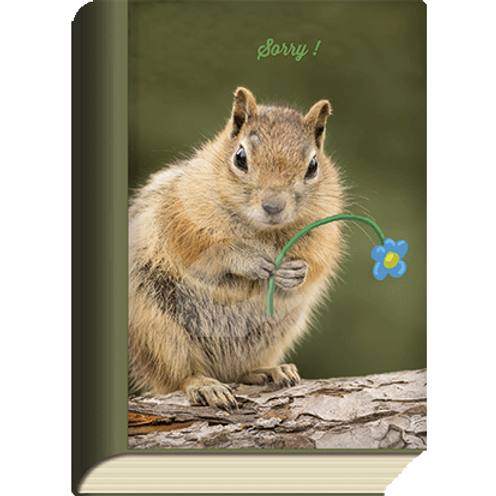 BookCard »Sorry«