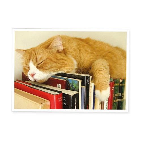 Postkarte »Schlafende Katze auf Büchern«