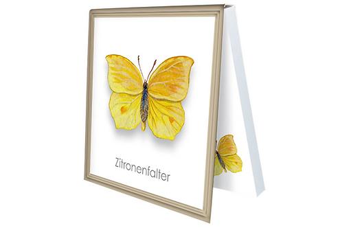 Klebezettel »Zitronenfalter«