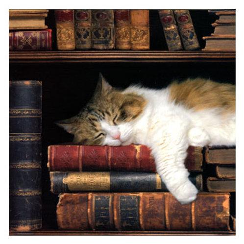 Karte »Kätzchen zwischen Büchern«