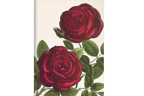 Kladde »Rote Rosen« (A6)