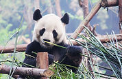 adorable-animal-asia-207435.jpg
