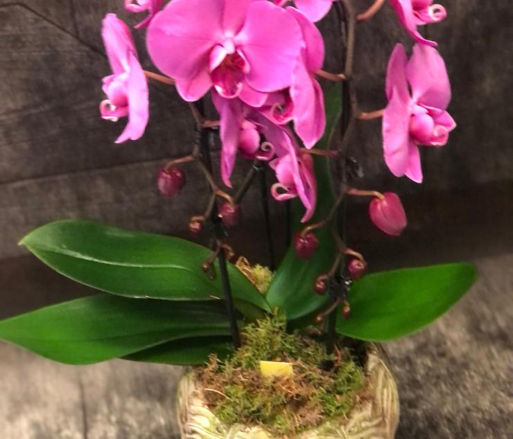 Orchidea a cascata